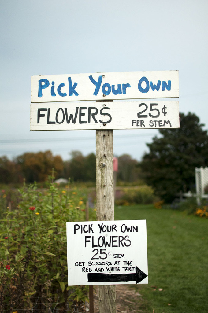 Pick Your own Flowers