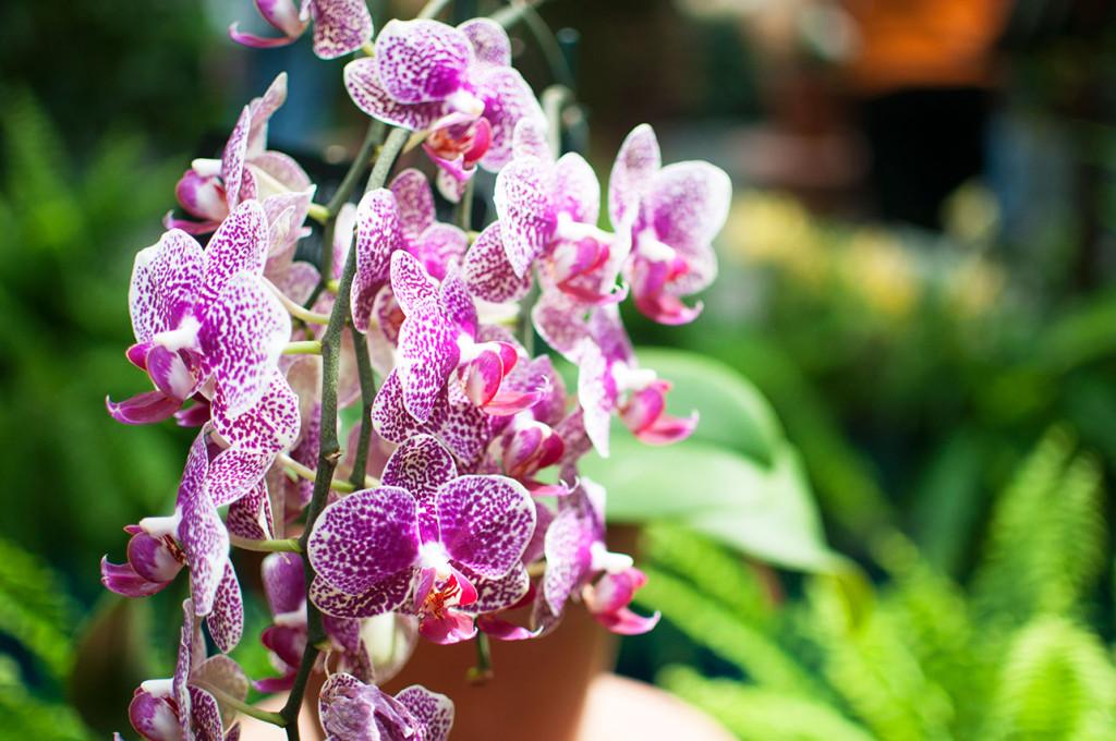 DC-Botanical-Garden-3