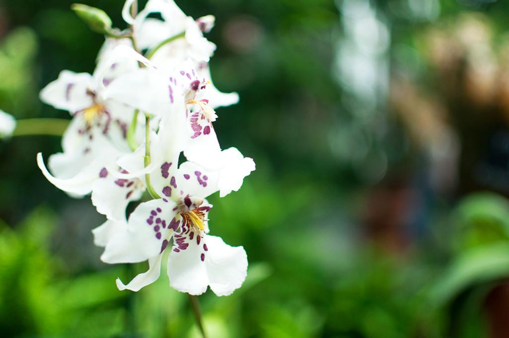 DC-Botanical-Garden-4