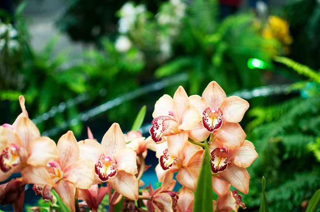 DC-Botanical-Garden-5