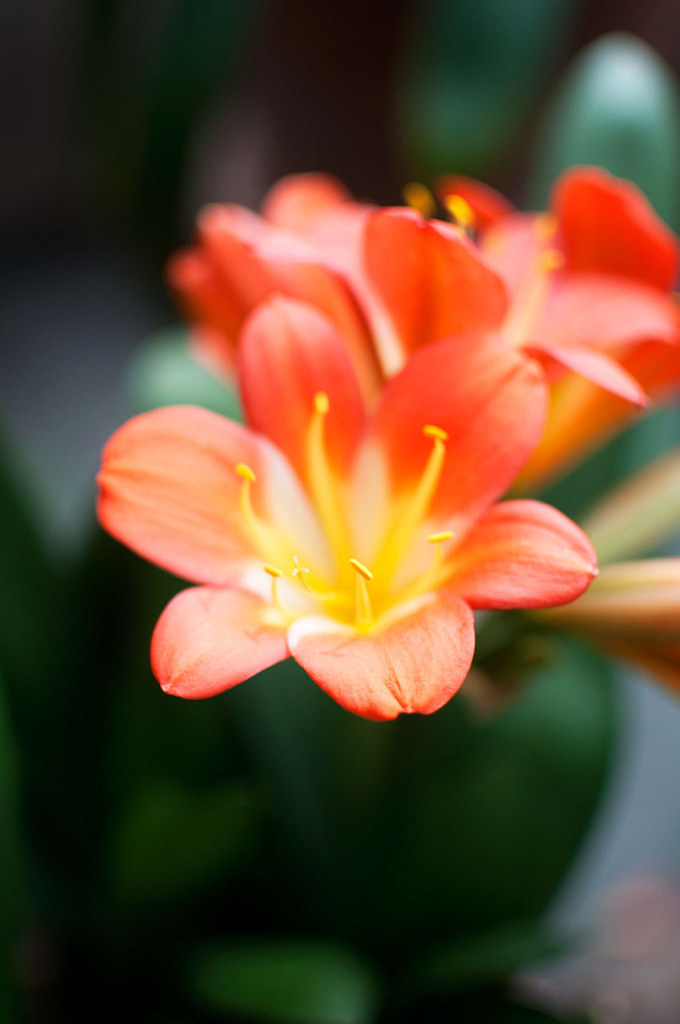 DC-Botanical-Garden-6